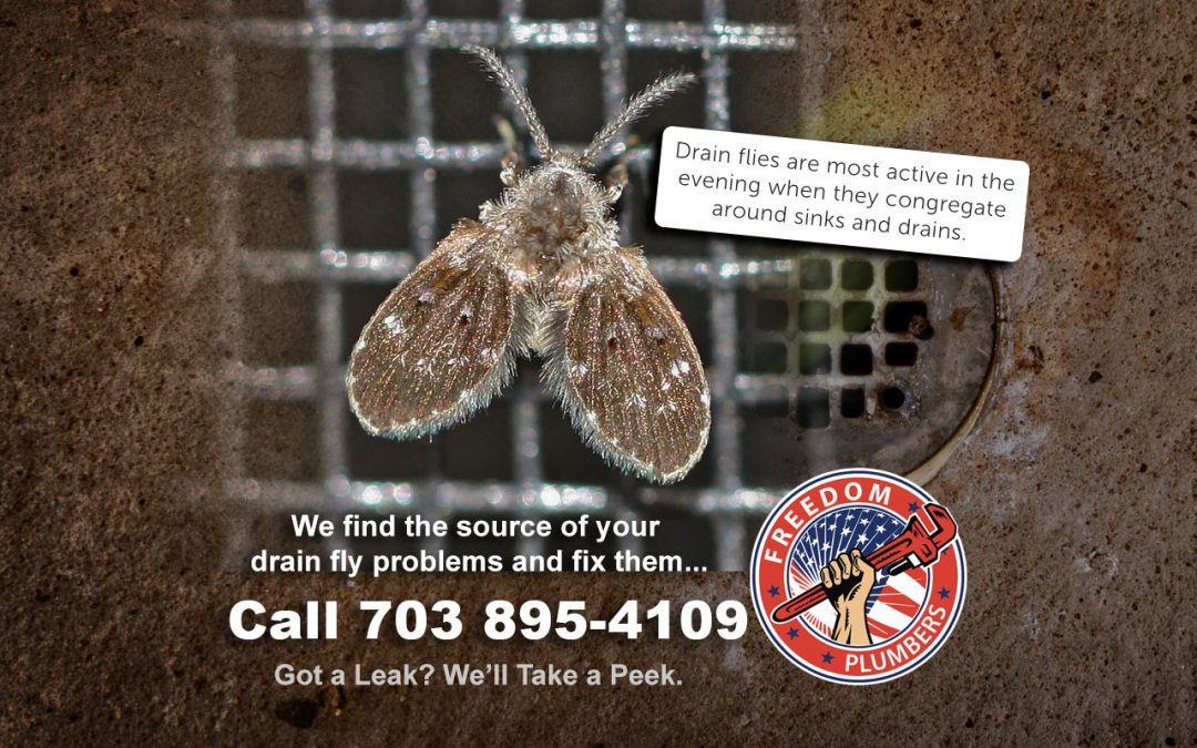 Drain Flies Septic System Inspection